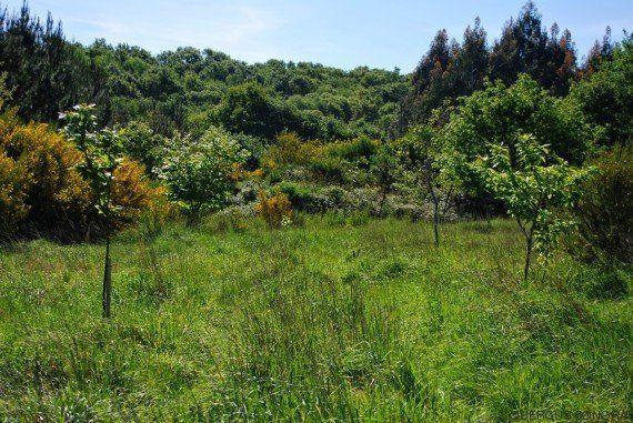 Quercus Sonora protege la flora autóctona gallega a través de la