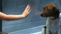 La nueva vida de Suzie, la perrita abandonada que protagonizó un triste viral