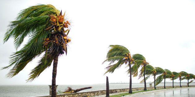 Palmeras en Caibarién (Cuba) tras el paso de Irma el 9 de septiembre de