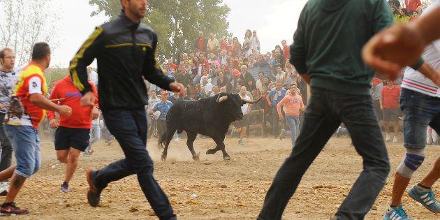 Vuelve el Toro de la Vega: ¿qué pasará este año con el