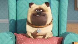 Estrenos de cine: por qué ver 'Mascotas' y 'Escuadrón