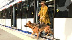 Discriminados por ir con perro guía: