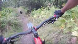 Un ciclista se encuentra un oso en la mitad de este estrecho