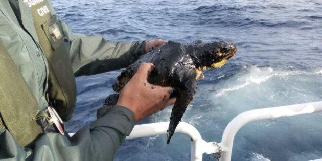 12 kilómetros cuadrados de combustible al sur de Gran Canaria por el pesquero