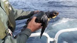El Gobierno eleva la alerta por el hundimiento del pesquero en