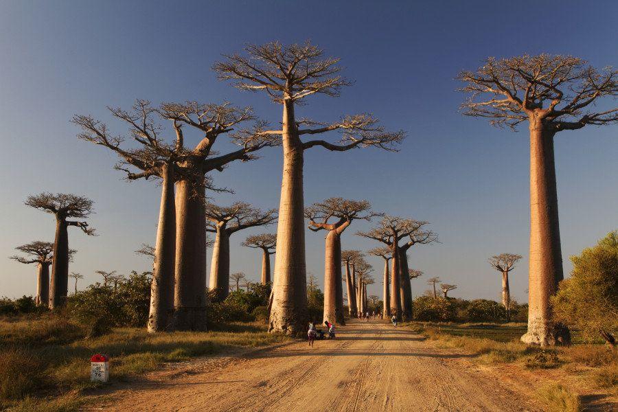 Día de la Tierra: 11 árboles raros que se encuentran por el