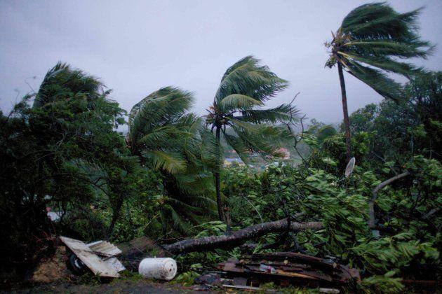 Destrozos en los árboles de la isla de Guadalupe, una posesión francesa en el Caribe, tras el paso de
