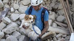 Perros rescatadores y perros rescatados en medio del terremoto en