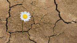 Resiliencia en tiempos de