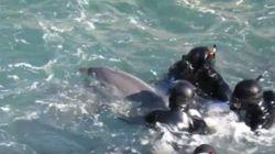 El vídeo del 'robo' de una cría de delfín rompe el corazón a miles de
