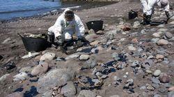 120 kilos de chapapote amenazan ya una Reserva de la Biosfera