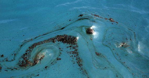 Avistan cerca de Gran Canaria el primer delfín manchado de