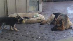 Este cachorro no tiene ninguna gana de siesta, por mucho que su madre insista