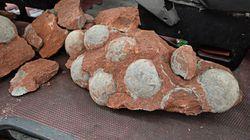 Descubren docenas de huevos de dinosaurios en China durante unas