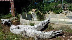 Túnez cerrará el zoo de la capital después de que varios visitantes mataran a un