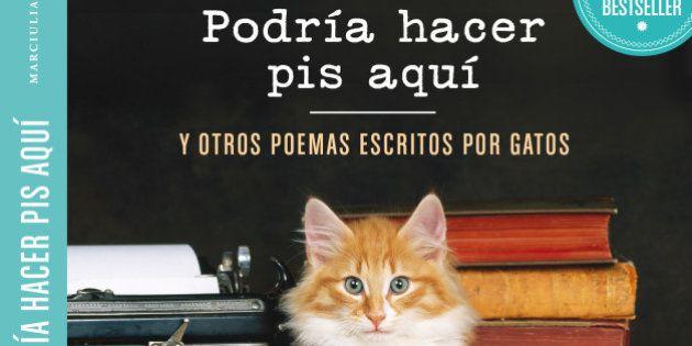 'Podría hacer pis aquí': cuando los gatos se convierten en poetas