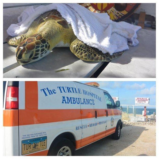 Cómo se las arregló este hospital para salvar a sus tortugas durante el huracán