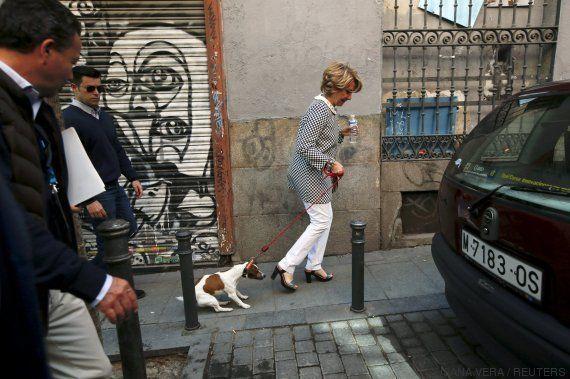 Pecas, el perro de Aguirre, un fenómeno en las redes