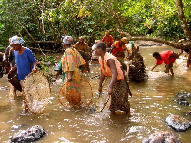 Bantou and Baka women fishing shrimps in a river on the edge of Lobéké National Park.The Jengi project...