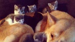 Perrete con gatitos: probablemente la foto más bonita que veas