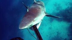 Así sobrevive un buceador al ataque de un tiburón