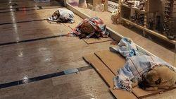 En Estambul las tiendas dan cobijo a los perros durante el