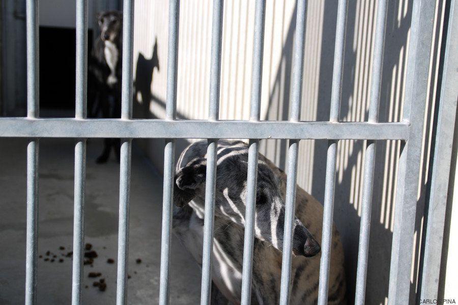 La bendición es la adopción: San Antón en el Centro de Protección de Animales de