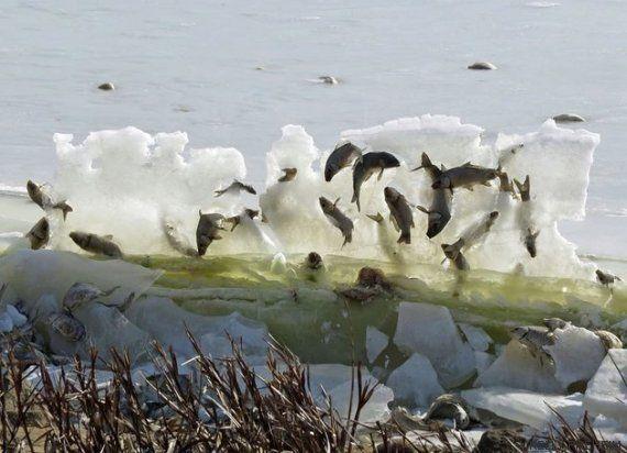 La historia que hay detrás de estos peces congelados en una pared de