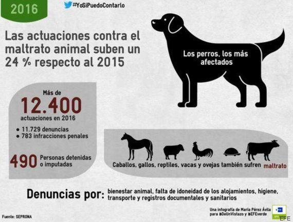 El Seprona realizó en 2016 más de 12.400 actuaciones contra maltrato animal, un 24%