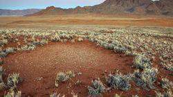 Una nueva hipótesis explica el misterio de los 'círculos de hadas' de