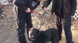 El emocionante momento en el que un perro es liberado tras 15 años
