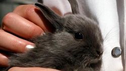 Los animalistas llevan al Parlamento Europeo los derechos de los