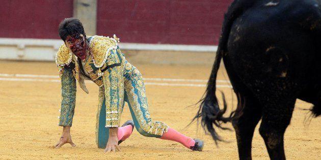 El diestro Cayetano Rivera es cogido en la faena a su primer toro durante la corrida de la Feria del...