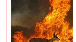No, esta fotografía no es de los incendios de