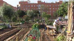 La gran apuesta de Sevilla por los huertos