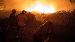 ¿Cuáles son las penas por incendios forestales