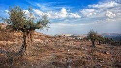 Día de la Tierra Palestina: ¿Pero de qué tierra estamos