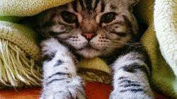 Los gatos prefieren a sus dueños antes que a la