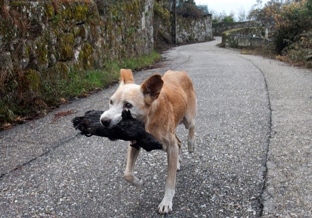 La imagen de una perrita con el cadáver de su cría calcinado se convierte en símbolo de la desolación...