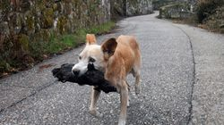 La imagen de una perrita con el cadáver de su cría calcinado se convierte en símbolo de la desolación en