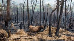 Unas 35.500 hectáreas han ardido en Galicia en la ola de