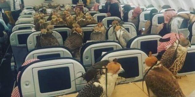 ¿Qué hacen 80 halcones en un