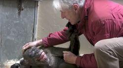 Este chimpancé se niega a comer hasta que reconoce a su antiguo