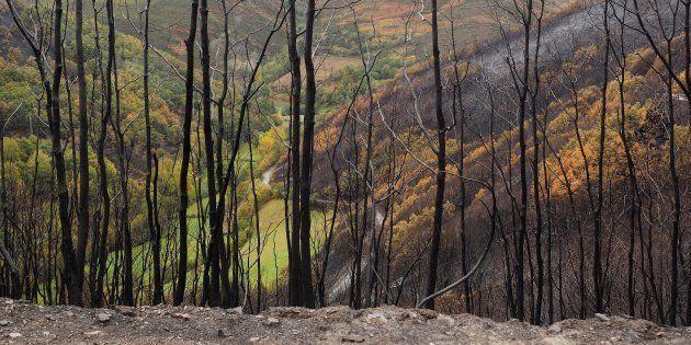 Paisaje de la Reserva Natural en San Martin de Cereixedo (Lugo) afectado por la oleada de incendios en...