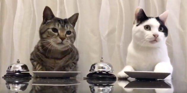El vídeo de estos dos gatos es lo mejor que verás hoy en