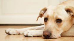 Cómo decirle al dueño de un perro que el adiós a su mascota ha