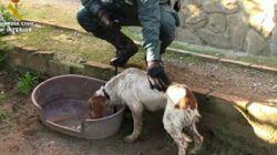 Rescatan medio centenar de animales hacinados en una perrera ilegal en