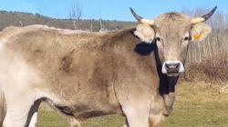 Crónicas desde el tractor IV: las vacas y las ovejas inundan el