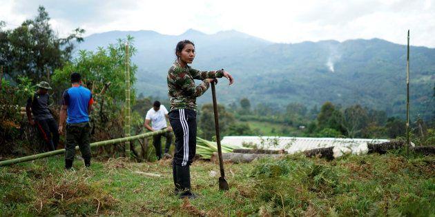 Una miliciana de las FARC, aún con ropa militar, ayudando en las tareas de adecentamiento de su campamento...