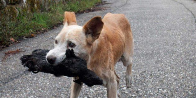 La verdad tras la foto viral de la perrita en el incendio de Galicia: es un macho y transporta un